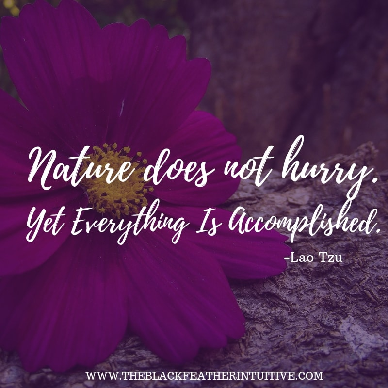 Nature does not hurry. Yet everything is accomplished.- Lao Tzu